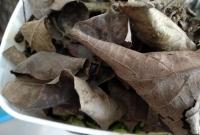 foto 10 - Colocar uma camada de folhas secas sobre os vegetais