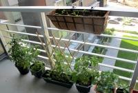 Vegetais na varanda