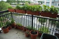 Criando vegetais em apartamento