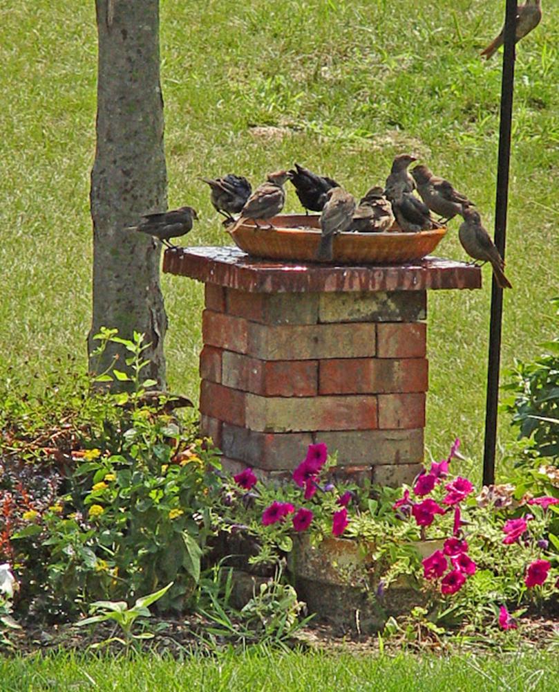 Banho de pássaro