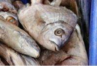 Cabeça e ossos de peixe