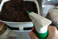 foto 13 -  Pulverizar a terra seca com água sem encharcar